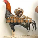 ayam bangkok, ayam mathai, ayam petarung, ayam aduan, ciri khas