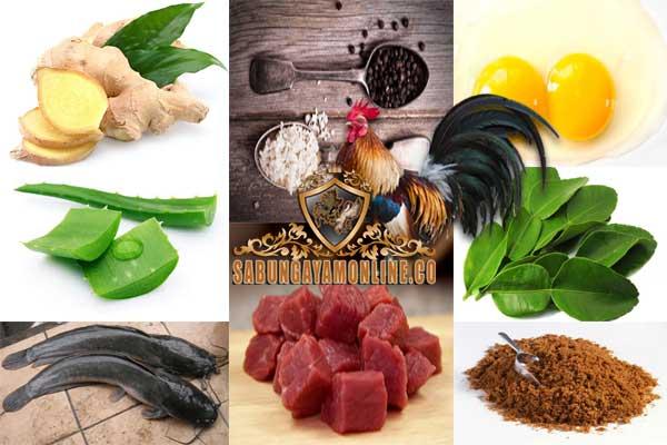 ramuan rahasia, ayam bangkok, ayam aduan, ayam petarung, jamu, jahe, lidah buaya, daun jeruk, kuning telur, daging kambing, lele, gula merah, suplemen, pakan, doping