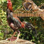 ayam panus asli, nenek moyang ayam bangkok, ayam petarung, thailand, bangkok