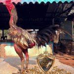 ayam siam, ayam bangkok, ayam petarung, kelebihan, ciri khas