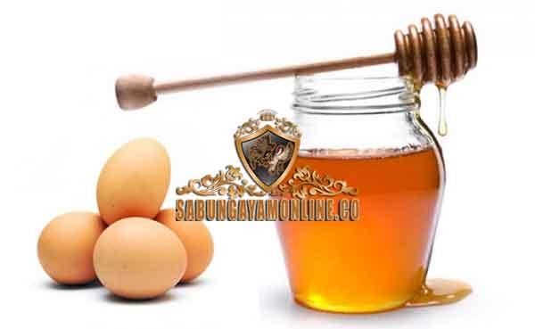 khasiat telur dan madu, ayam aduan, ayam petarung, tips, cara ampuh, obat, suplemen, vitamin