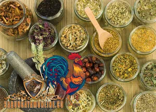 jamu paling ampuh, ayam aduan, ayam bangkok, ayam petarung, ramuan, resep